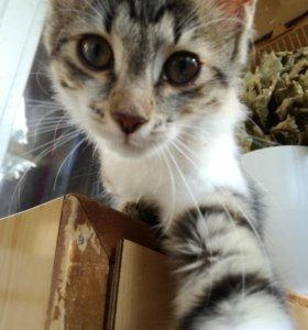 Ласковые котята даром!