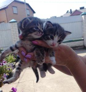 Беспродистые 3-х недельные котята,звоните Олеся.