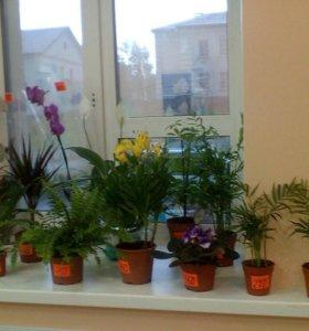 Магазин свежих цветов Орхидея