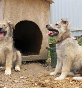 Чудесные щенки