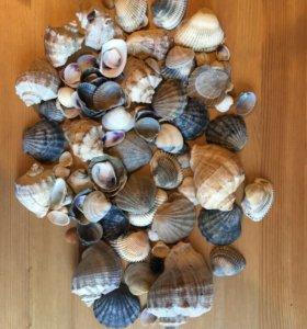 Ракушки морские
