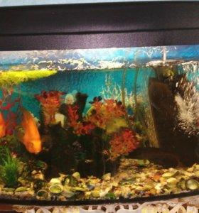 Аквариум с рыбками на 70 литров