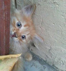 В добрые руки рыжего  котика!