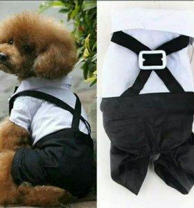 Костюм-комбинезон для собак