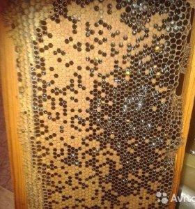 Продается свежий мед
