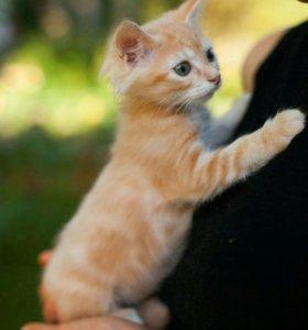Отдам котенка в надежные руки!