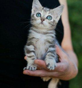 Отдам котенка в самые добрые руки №