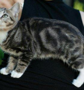 Отдам котенка подростка в надежные руки!