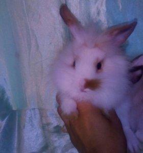 Декаративные крольчата