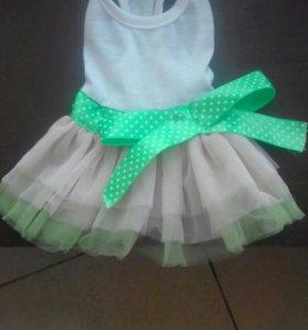Платья для Чихуа, Тоя, Йорка
