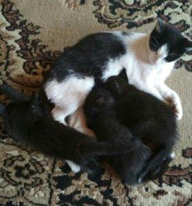 Котенок кошка чёрная