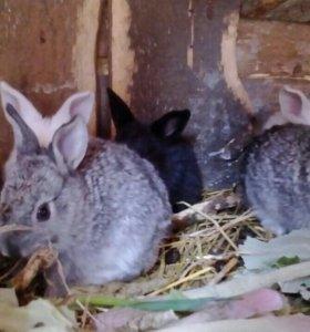 Кролики 2х месячных