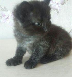 Черные котята