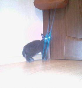 Котёнок! Мышеловка