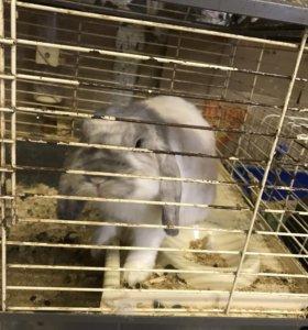 Висооухий кролик с клеткой