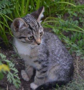 Милые котята кошечки