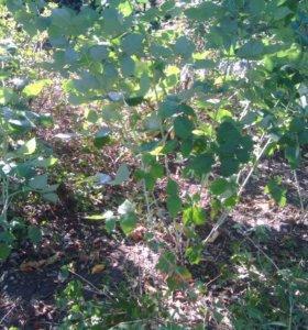 Чистка малины и огородов