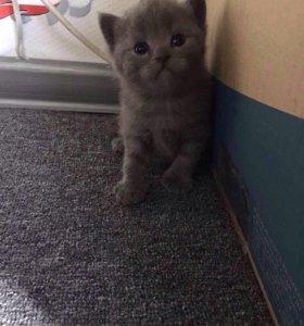 ‼️‼️Продаю 4 котёнка 🐈🐈🐈🐈,бронируем ‼️‼️‼️