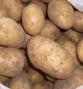 Картошка свойская