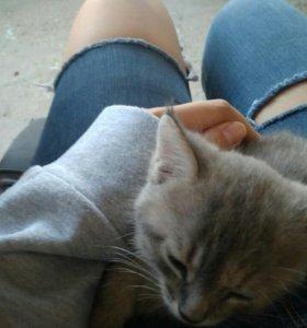 Отдам котёнка в хорошие руки.
