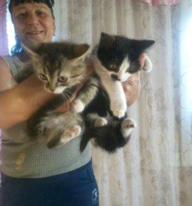 Котята 2 месяца