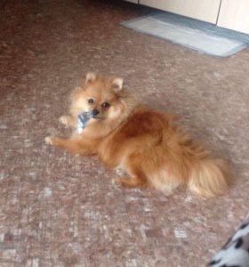 Собака с документами с клеймом