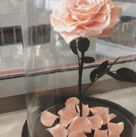 роза в прозрачной колбе на деревянной подставке