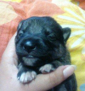 Маленькие щеночки:)