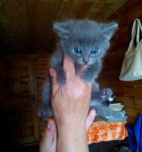 Отдам котенка девочка
