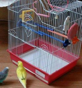 Волнистые попугаи с клеткой.