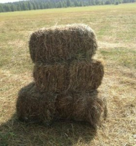 Мягкое луговое сено