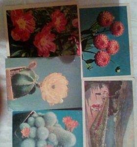 Старинные открытки СССР