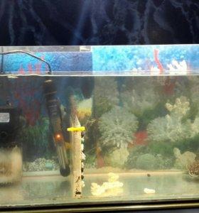 Красноухая черепаха,аквариум,фильтра,подогрев воды