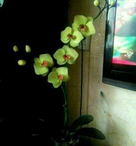 Орхидея из капрона