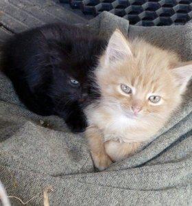 Замечательные котятки ищут любящий дом))