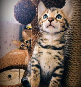 Очаровашка котик!!!