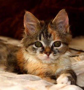 Котёнок в дар!