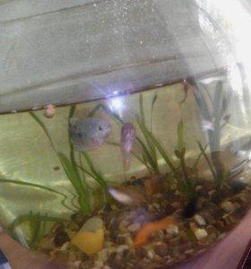 аквариум с рыбами!
