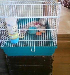 Мышка ручная