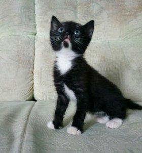 Котята (1,5 месяца)