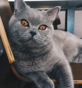 Вязка кота в кстово