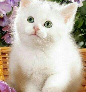 Котята белые и рыжие