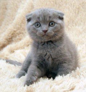 Плюшевый котик