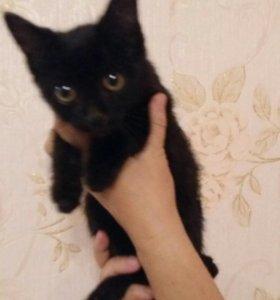 Отдам котёнка , срочно,на вид 1-2 месяца