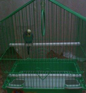 Волнистый попугай(мальчик) и клетка