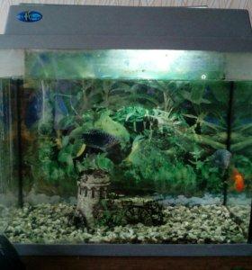 Аквариум вместе с рыбами