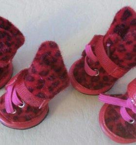 Обувь для собак мелких пород.