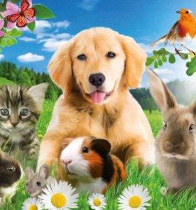 Домашняя передержка животных