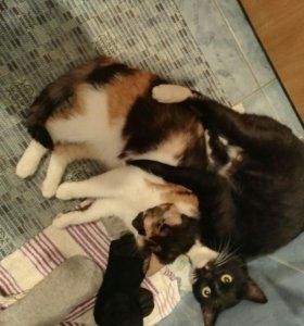 Кот и кошка. Взрослые.