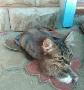 Котенок демон, мальчик,ловит мышей;Артезианская 32